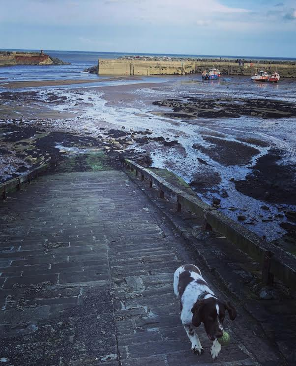 Dog Staithes