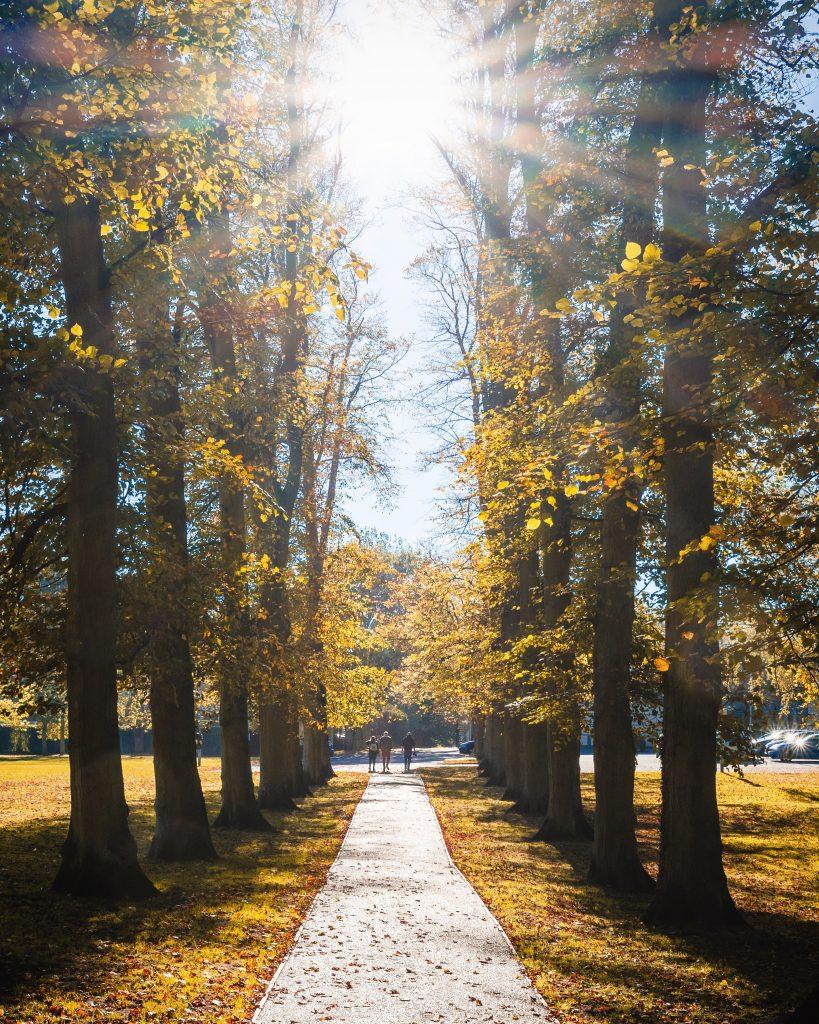 Lincolnshire Autumn