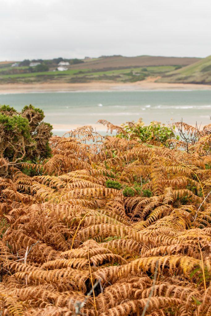 Cornwall Autumn