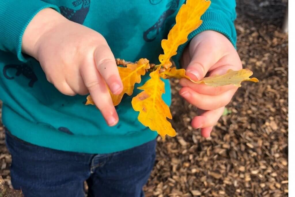 Forest School, Forest School Activities Foraging