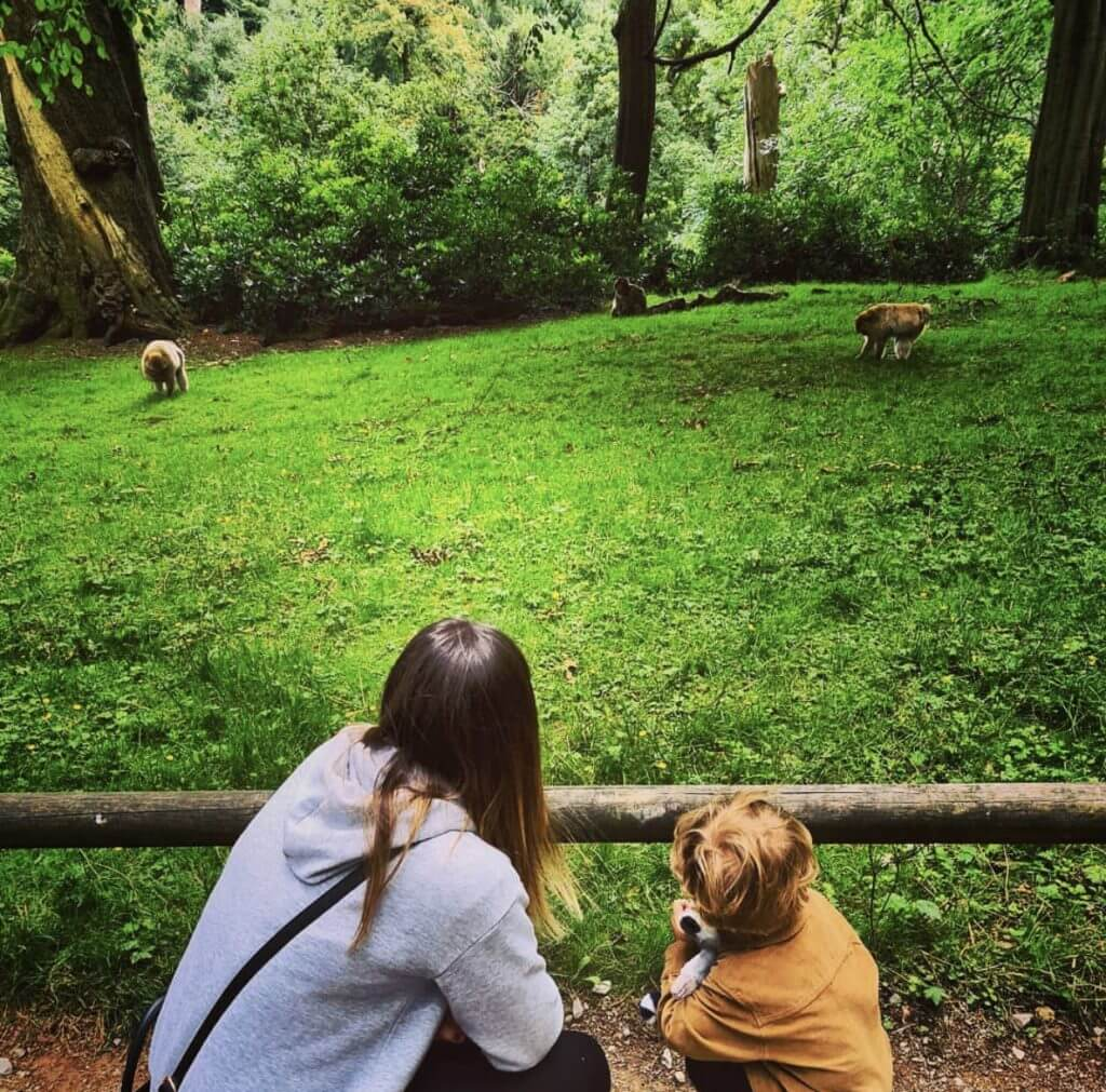 Our Trentham Monkey Forest Review
