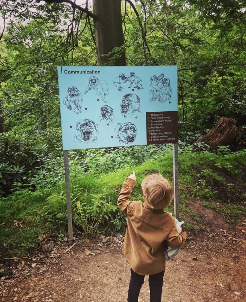Trentham Monkey Forest is great for teaching children about animals