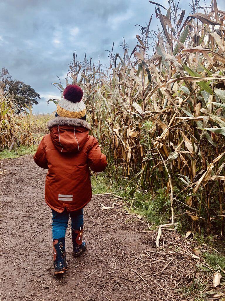 Inside The Corn Maze