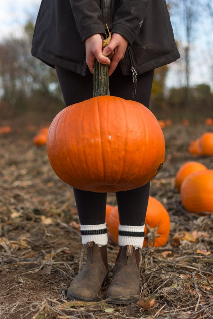 Pumpkin picking is a fun alternative to trick or treating at Halloween