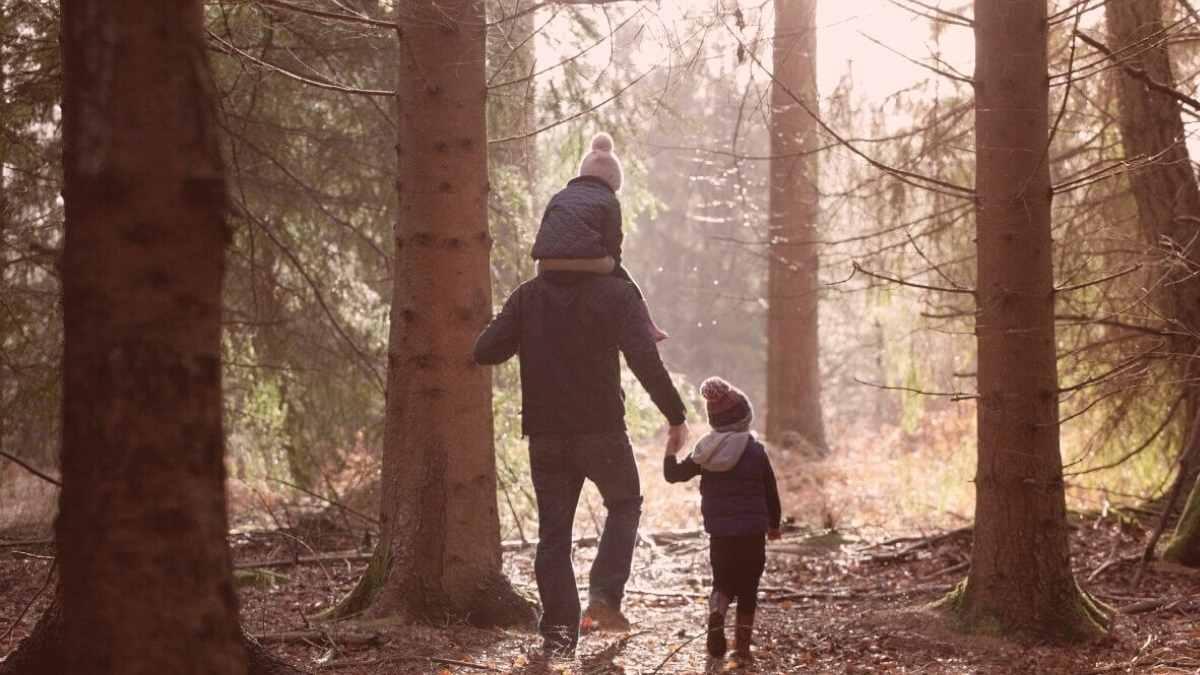 Planning a Woodland Walk With Children