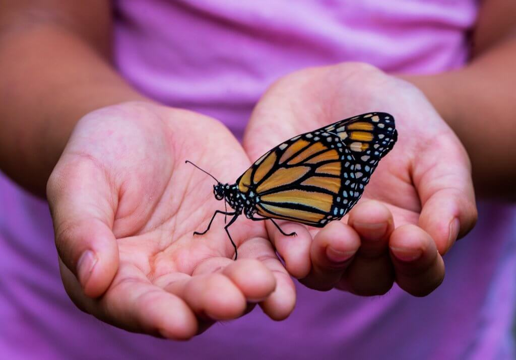 Toddler Holding Bug, Bug Hunting Is A Great Outside Activity For Toddlers