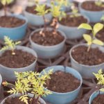 5 of the Best Children's Seed Growing Kits