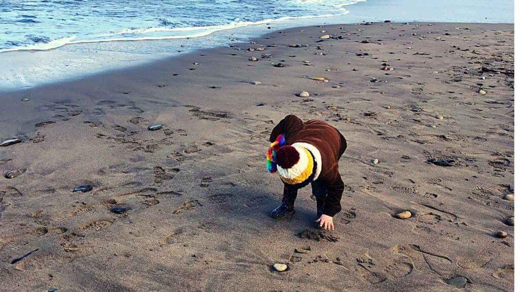 Beach School Collecting