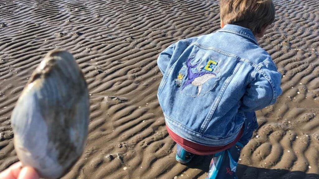 Beach School Collecting Shells