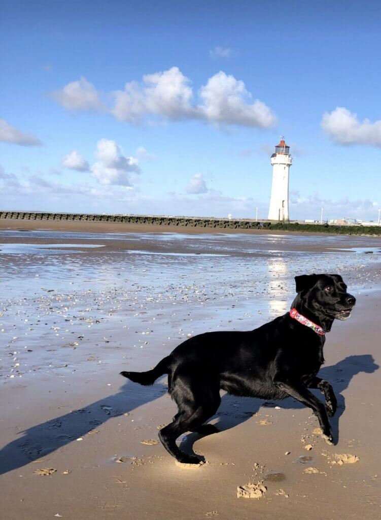 The Lighthouse at New Brighton Beach