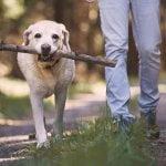 7 Of The Best Dog Walks In Stoke on Trent