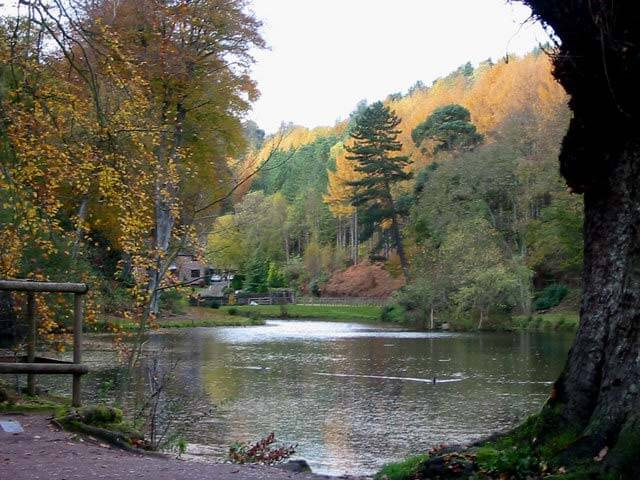 Dimmingsdale is a beautiful location for a dog walk in Stoke on Trent