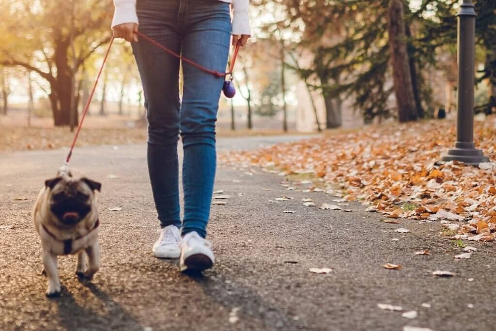 Dog walking is a great way to reduce anxiety