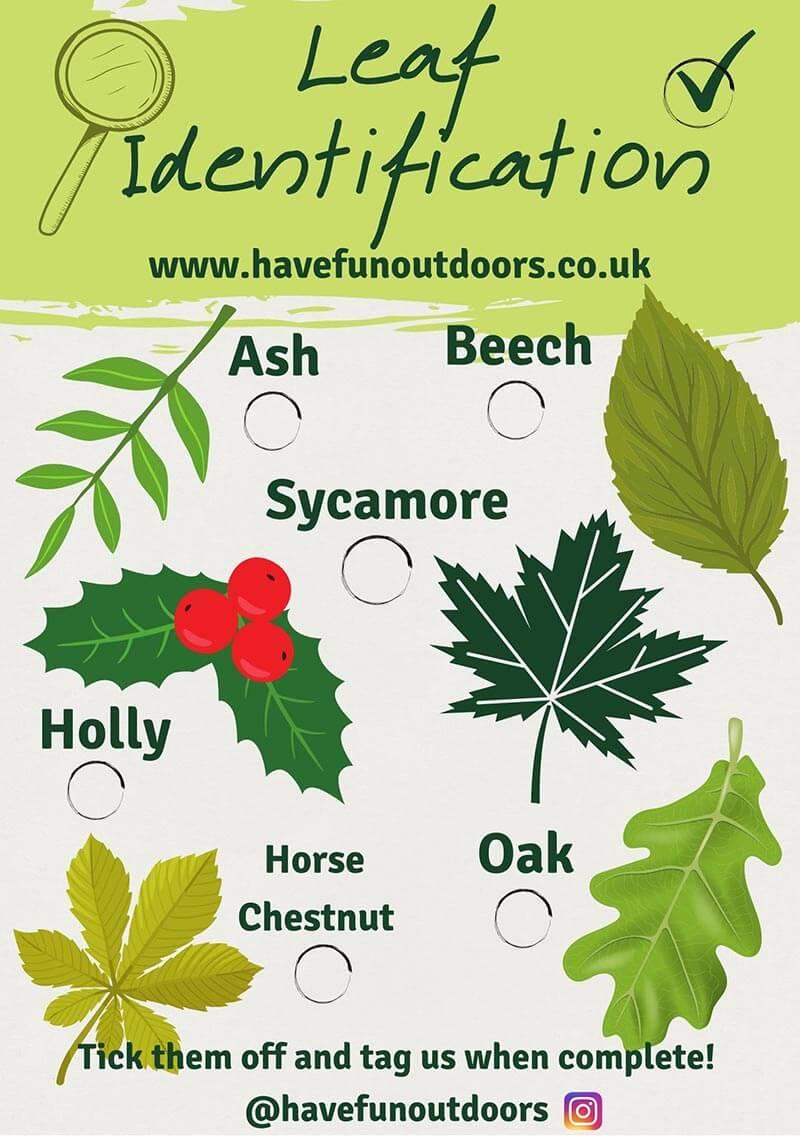 Leaf Identification Game
