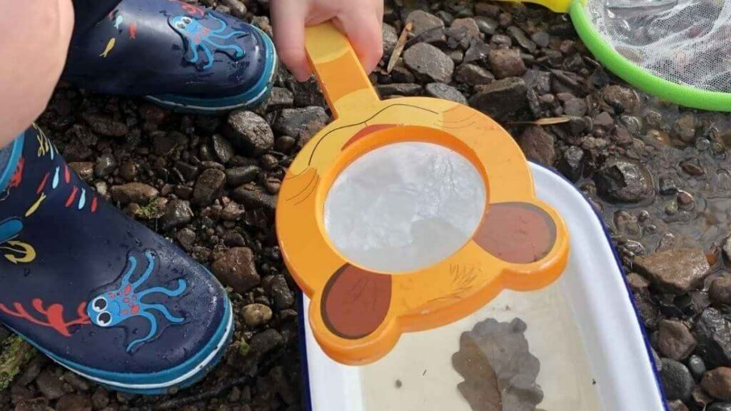Magnifying Glass Pond Dipping