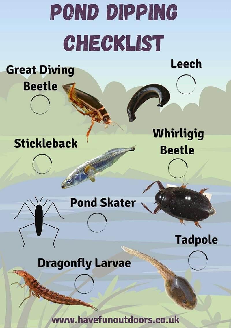 Pond Dipping Checklist