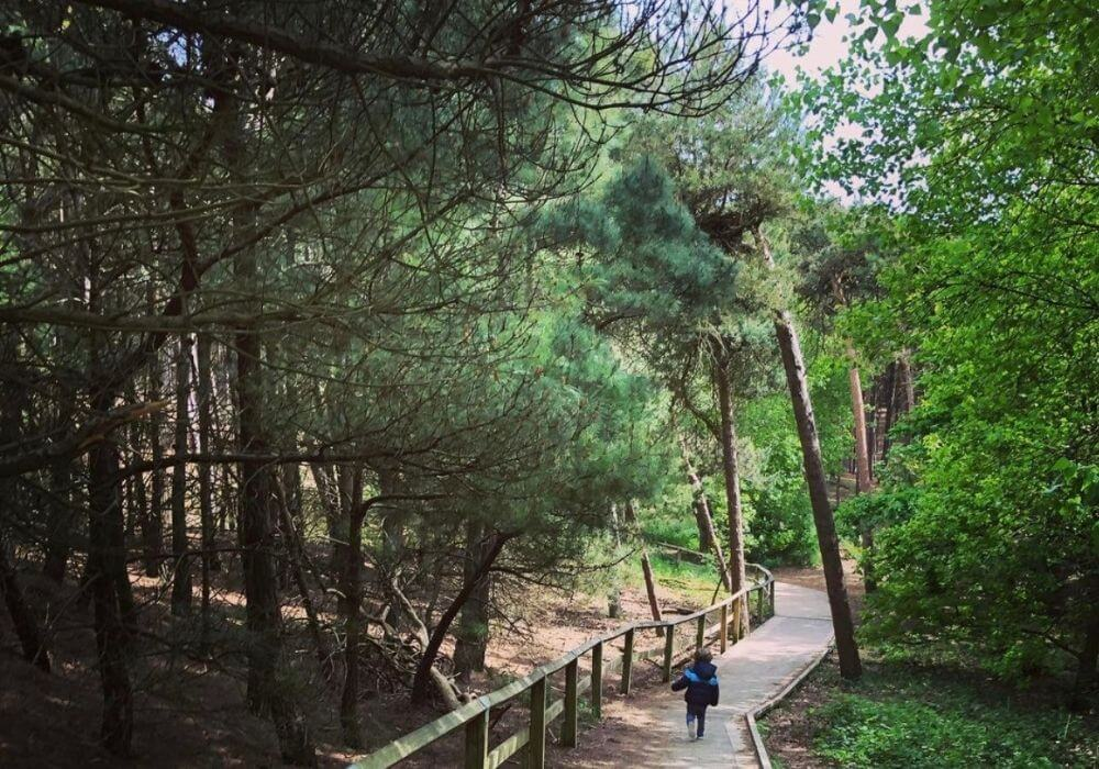 Formby Pinewoods Liverpool