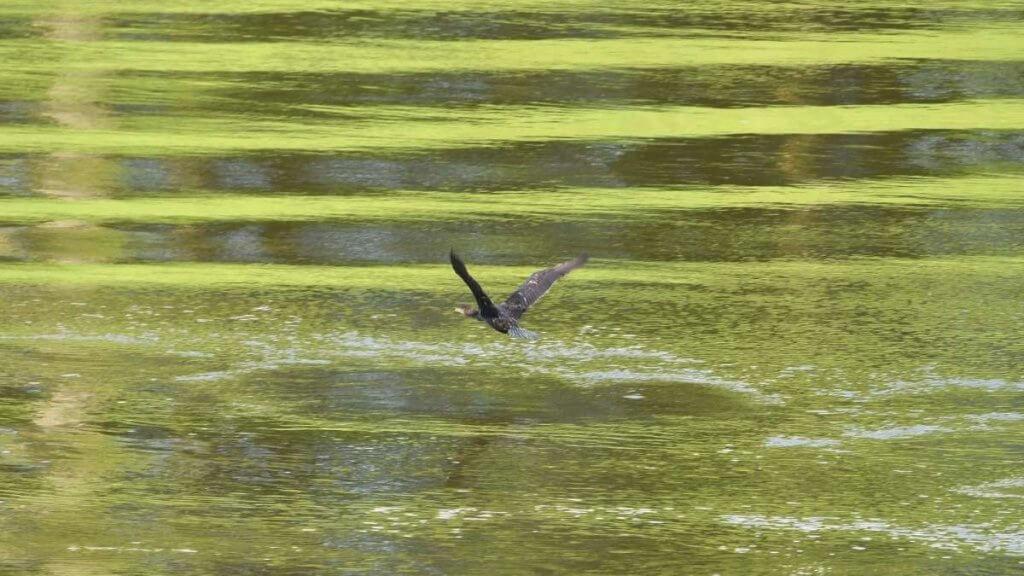 Hawksmoor Nature Reserve