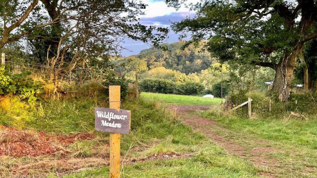 Eco Escapes Campsite Wildflower Meadow