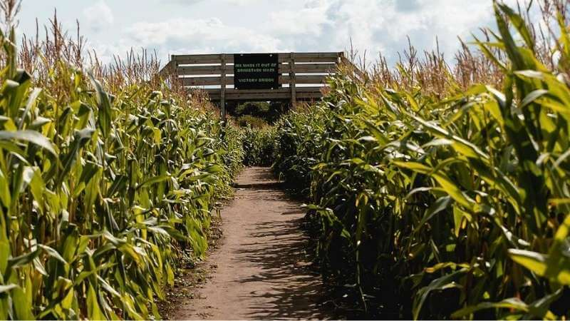 Brimstage Maze is a fun day out in the Wirral for children